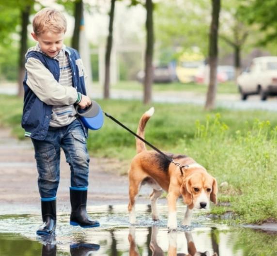 Домашните животни и децата