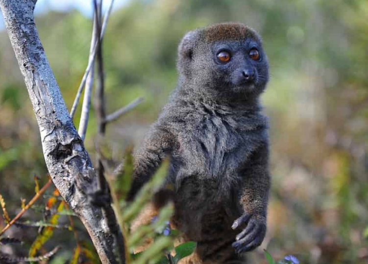 Видове примати, които са били открити през 21-ви век