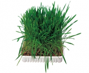 Trixie Grass for Rodents - Трева за гризачи