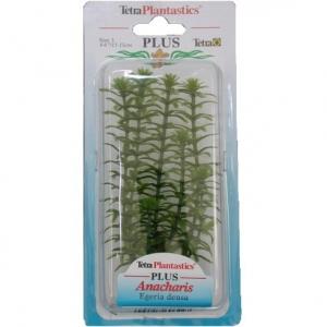 Tetra Растение за аквариум анахарис