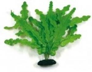 Croci Microsomium украса за аквариуми - растение
