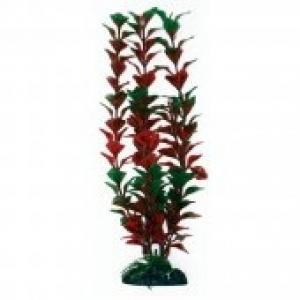 Croci Ludwigia украса за аквариуми - растение