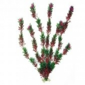 Croci Flora Bicolour украса за аквариуми - растение