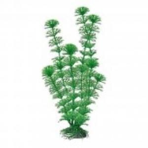 Croci Cabomba украса за аквариуми - растение