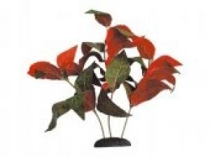Croci Alternant украса за аквариуми - растение
