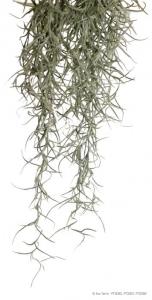 Exo Terra Висящо декоративно растение за терариум - Spanish Moss S 1