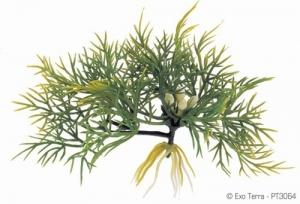 Exo Terra Плаващо декоративно растение за терариум Fanwort 1