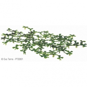 Exo Terra Плаващо декоративно растение за терариум Duck Weed 1