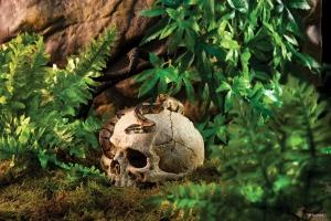 Exo Terra Декоративен череп на примат 1