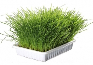 Trxie Cat Grass - Трева за котки 100 гр.