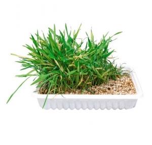 Trxie Cat Grass - Трева за котки