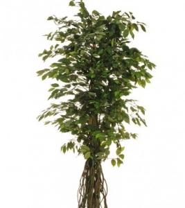 Изкуствен Бенджамин зелен лиана